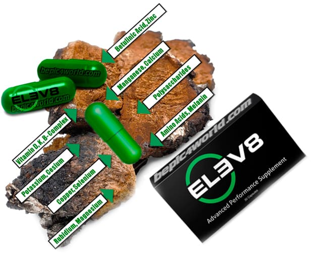Chaga Mushroom a healthy natural ingredient from the Elev8 B-Epic