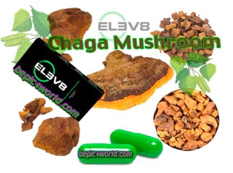 Chaga Mushroom ingredient in Elev8