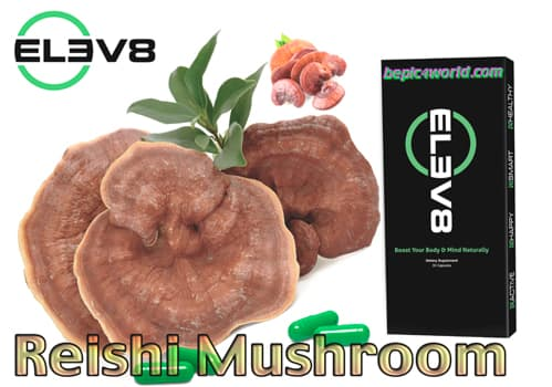 Reishi Mushroom Extractin in the Elev8 B-Epic green capsule
