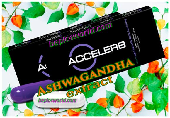 Ashwagandha extract in Acceler8